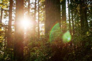 Redwood National Forest, Oregon. © Cavan Images