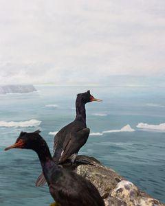 Fairway Rock, Bering Strait
