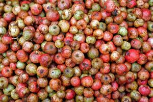 A heap of cider apples