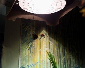 Doris Butterfly; Audubon Butterfly Garden and Insectarium, New Orleans