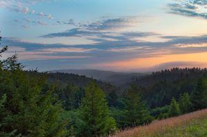 Redwood National Forest, California. © Cavan Images