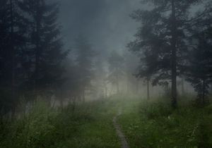 Unnamed forest path