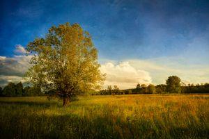 Memories of trees .1
