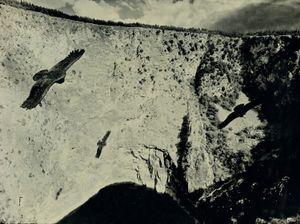 California Condor, Imotski Croatia