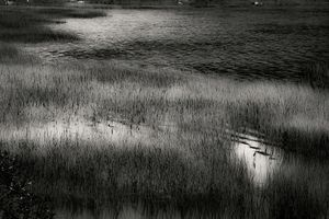 Upper Hadlock Pond 18, © Alan Henriksen