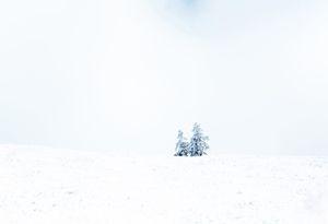 www white winter couple