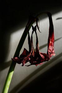 My broken flowers.