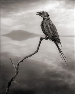 Petrified Songbird © Nick Brandt. Courtesy of Edwynn Houk Gallery, New York