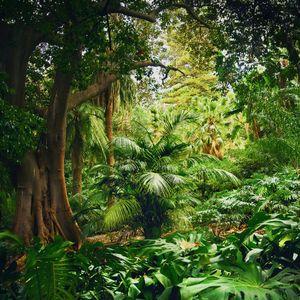 Jungles 07 © Olivia Lavergne