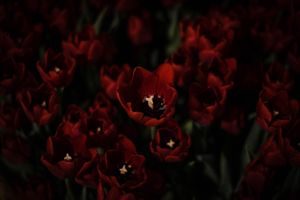 Sleepless, brooding, red soldiers