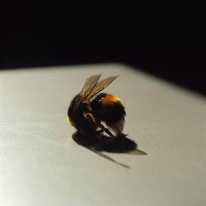Bee, from the series Still Here © Lydia Goldblatt