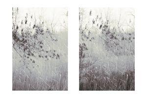 Reflections No. 1