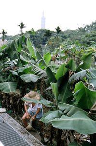 Taiwan city jungle