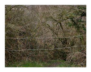 Totley Brook #5
