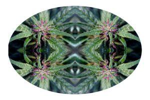 Pharma Flora 02