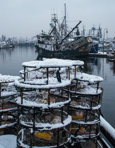 Crab pots in the snow