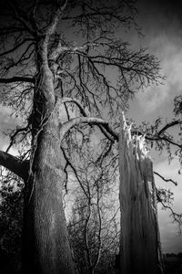 © Marie Starr There were bad storms in the days after I came home. I was struck by how quickly something as mighty as a hundred-year-old oak tree could be ripped down at the ruthless hand of nature. This landscape would never be the same again.