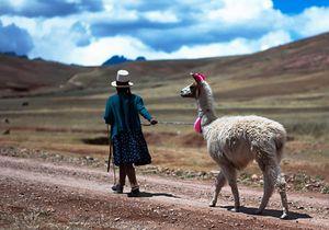 Woman and Llama