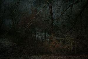 Imago woods II.