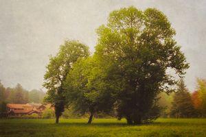 Memories of trees .4