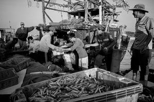 Big haul of fish