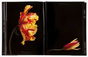 spread 166 and 167,  Flaming Parrot Tulip (Tulipa 'Flaming Parrot'), Clusiana Tulip (Tulipa 'Clusiana')From the book, joSon Intimate Portraits of Nature