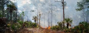 Fire in the Pines #2