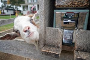 Visit to a Public Farm
