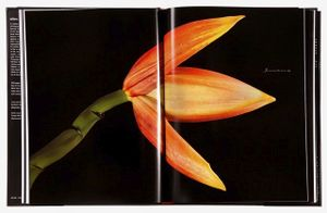Spread 49, Japanese Banana (Musa basjoo) From the book,  joSon Intimate Portraits of Nature