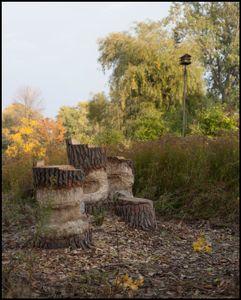 Beaver Stumps, 2017