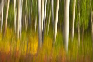 Impressions of Autumn, Santa Fe