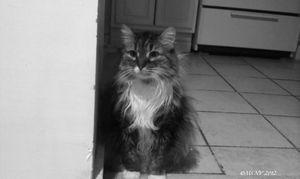 Miss Muffin