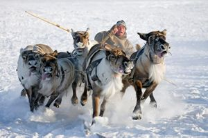 Finish © Sergey Anisimov, Russian Federation