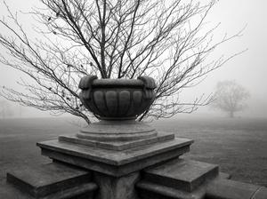 Empty Urn, Waveny Park, New Canaan, 12 12 20