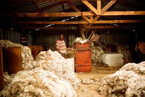 Die Schäfer von Lesotho
