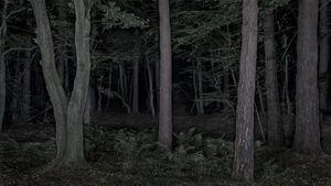 Foresta - reverse 03-1