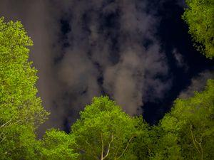 Night Trees of New York: Bryant Park Spring