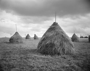Haystack Village, Sirbi, 1999. A haystack can last ten years or longer. In its life, it may be traded or handed down by inheritance. © Kathleen Laraia McLaughlin.