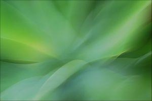 Agave Natural/Green