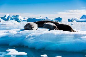 La siesta, on the ice
