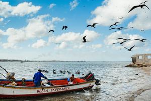 Seagulls, pelicans and hopes (Punto Fijo, Venezuela. 2015)