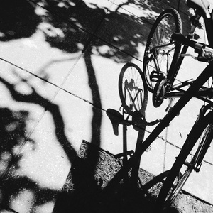 Bike, Tree, and Shadows, Washington, D.C.