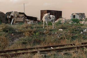 Romania - The horse