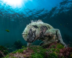 Seawater Dragon #3