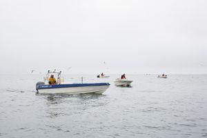 Fishermen, Qeqertarsuaq