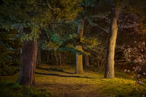Night Trees of New York: Brooklyn Landscape