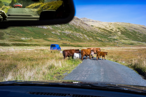 Rush hour in the Lake district National Park.