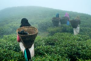 Pickers in the fog.
