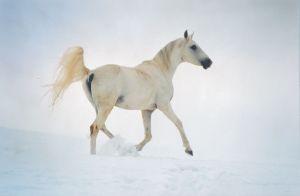snow arab