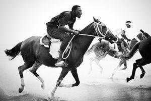 Horses Charging 1
